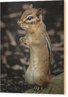 Wood Print featuring the photograph Alvin by Linda Karlin