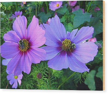Always Loved Cosmos Wood Print by Shirley Sirois