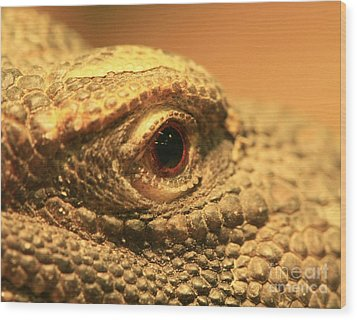 Always Watch Your Back - Benti Uromastyx Lizard Wood Print by Inspired Nature Photography Fine Art Photography