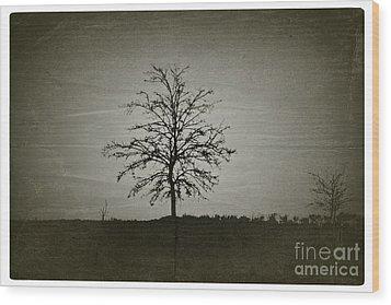Am Trees - No.226 Wood Print