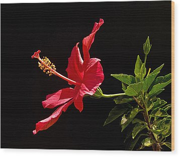 Amapola Wood Print