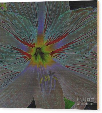 Amaryllis Colors Wood Print by D Hackett