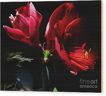 Amaryllis Duet Wood Print by Julia Hassett