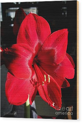 Wood Print featuring the photograph Amaryllis Named Black Pearl by J McCombie