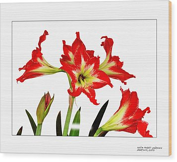 Wood Print featuring the photograph Amaryllis On White by David Perry Lawrence