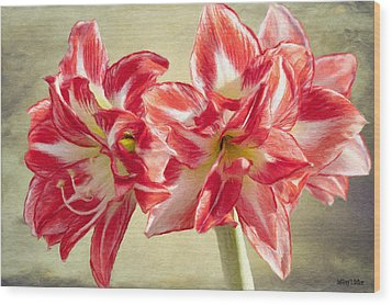 Amaryllis Red Wood Print by Jeff Kolker