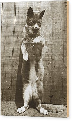 Wood Print featuring the photograph Amateur Feline Fotografer Cat With A Box Camera  Historical Photo 1900 by California Views Mr Pat Hathaway Archives