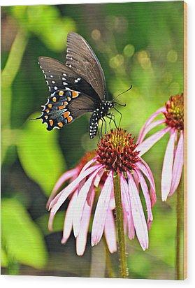 Amazing Butterfly Wood Print by Marty Koch