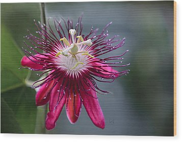 Amazing Passion Flower Wood Print by Penny Lisowski