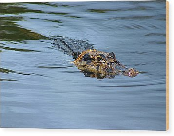 Wood Print featuring the photograph Amazon Alligator by Henry Kowalski