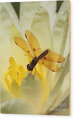 Amber Dragonfly Dancer Wood Print