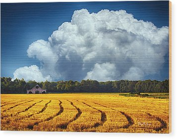 Amber Fields Wood Print by Barry Jones