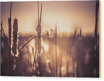 Wood Print featuring the photograph Amber Glow by Jason Naudi Photography