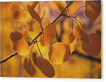 Amber Leaves Wood Print by The Forests Edge Photography - Diane Sandoval