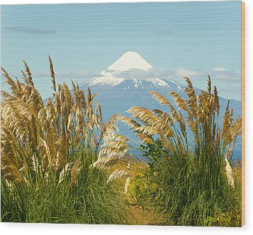 Amber Waves Of Osorno Wood Print