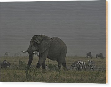 Wood Print featuring the photograph Amboseli Giant by Gary Hall
