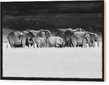 Amboseli Herd With Egret Wood Print