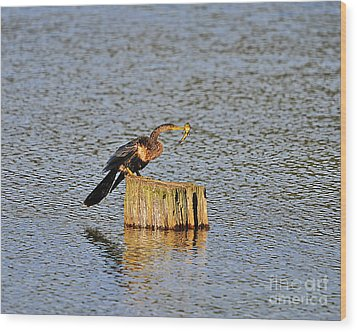 American Anhinga Angler Wood Print by Al Powell Photography USA