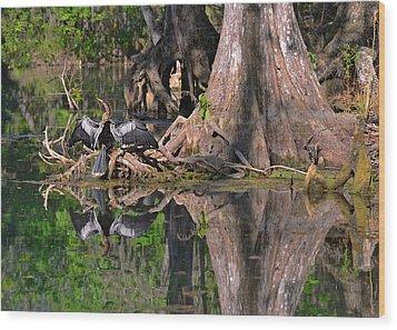 American Anhinga Or Snake-bird Wood Print by Christine Till