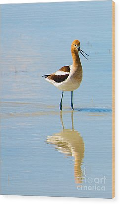 Wood Print featuring the photograph American Avocet by Vinnie Oakes