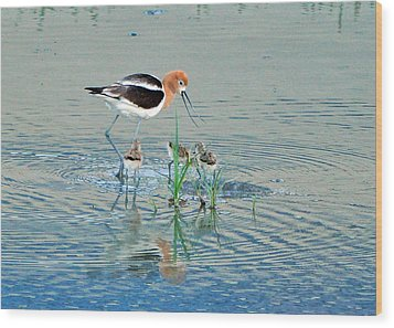 Wood Print featuring the photograph American Avocet With Young by Lula Adams