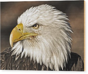 American Bald Eagle 33 Wood Print by Marty Koch