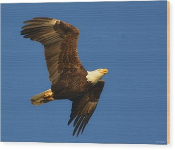 Wood Print featuring the photograph American Bald Eagle Close-ups Over Santa Rosa Sound With Blue Skies by Jeff at JSJ Photography