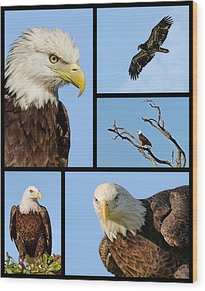 American Bald Eagle Collage Wood Print by Dawn Currie