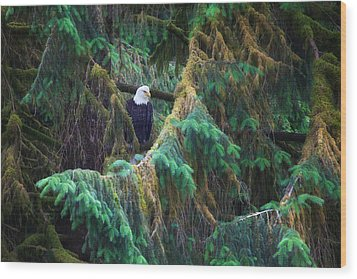 American Bald Eagle In The Pines Wood Print by June Jacobsen
