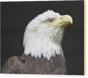 American Bald Eagle Profile Wood Print by Richard Bryce and Family