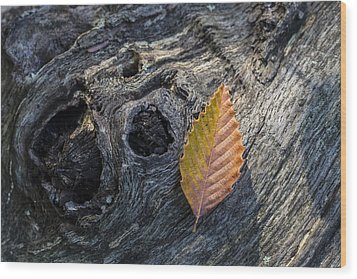 Wood Print featuring the photograph American Beech Leaf by Andrew Pacheco