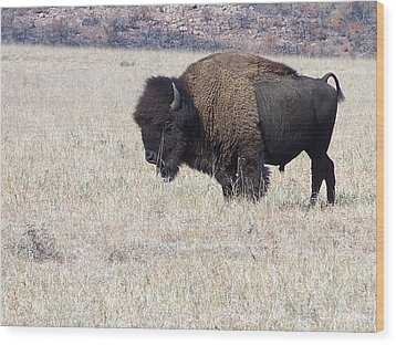 Wood Print featuring the photograph American Bison by Alan Lakin