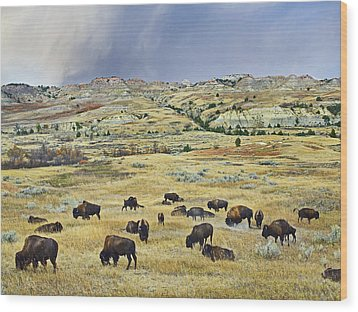 American  Bison Herd Grazing Wood Print by Tim Fitzharris