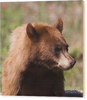 American Black Bear Wood Print by Martha Marks