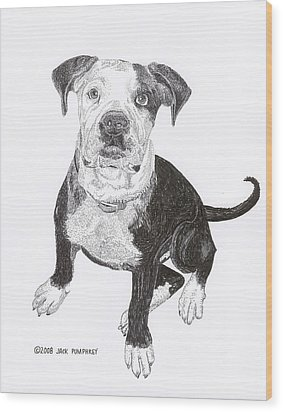 American Bull Dog As A Pup Wood Print by Jack Pumphrey