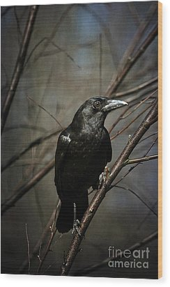 American Crow Wood Print by Lois Bryan