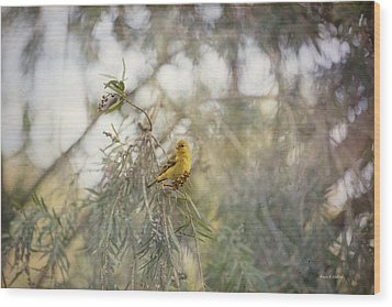 American Goldfinch In Winter Plumage Wood Print by Angela A Stanton
