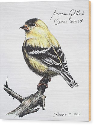 American Goldfinch Wood Print by Katharina Filus