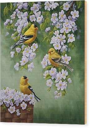 American Goldfinch Spring Wood Print by Crista Forest