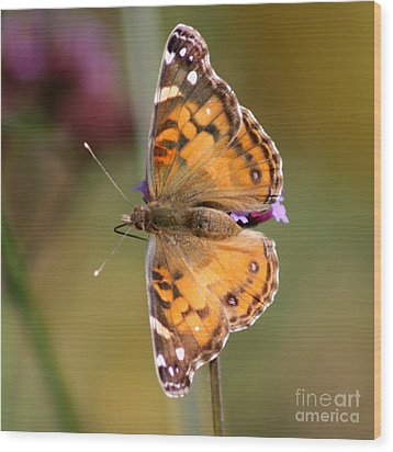 American Lady Butterfly Wood Print by Karen Adams