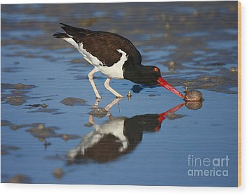 Wood Print featuring the photograph American Oystercatcher Mirror by John F Tsumas