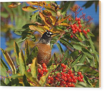 American Robin Wood Print by James Peterson