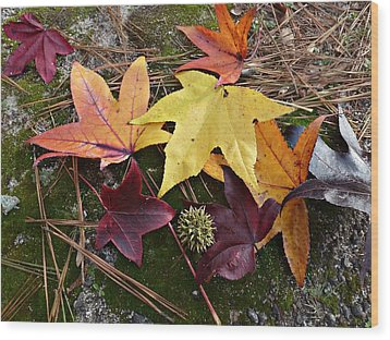 Wood Print featuring the photograph American Sweetgum Autumn Display by William Tanneberger