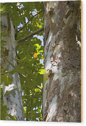 Wood Print featuring the photograph American Sycamore by Denise Beverly