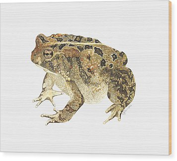 American Toad Wood Print by Cindy Hitchcock