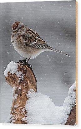 American Tree Sparrow In Snow Wood Print