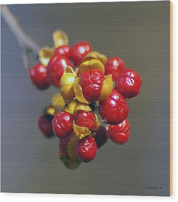 American Winterberry Wood Print by Brian Wallace