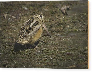 American Woodcock 2 Wood Print by Thomas Young