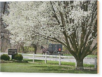 Amish Buggy Fowering Tree Wood Print