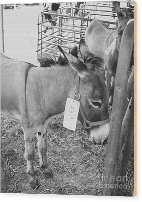Amish Donkey At Action Wood Print by Eric  Schiabor